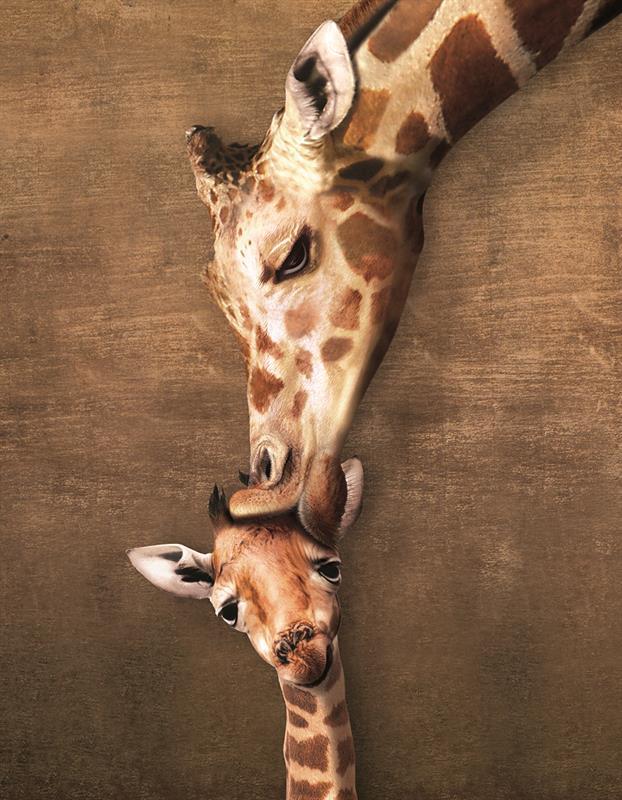 Картинки смешные с жирафами, летие девушке картинки